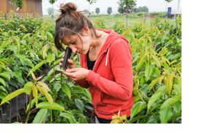 Eine Frau untersucht ein Blatt einer Pflanze. (Foto: Hans-Martin Issler)